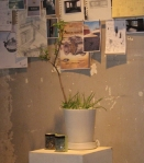 display-with-plants-and-jars_1_1
