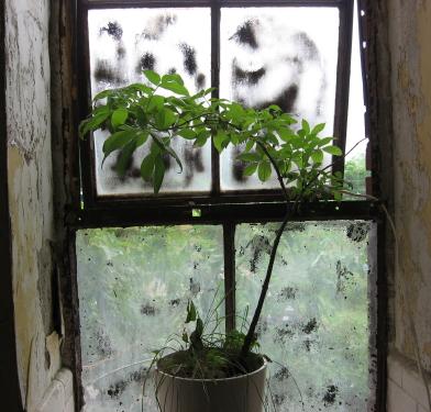 Lia's plant_1_1